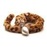 Rosebud : Queue de tigre léopard